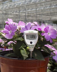 Agriculture GroLine with Purple Flowers in a Greenhouse