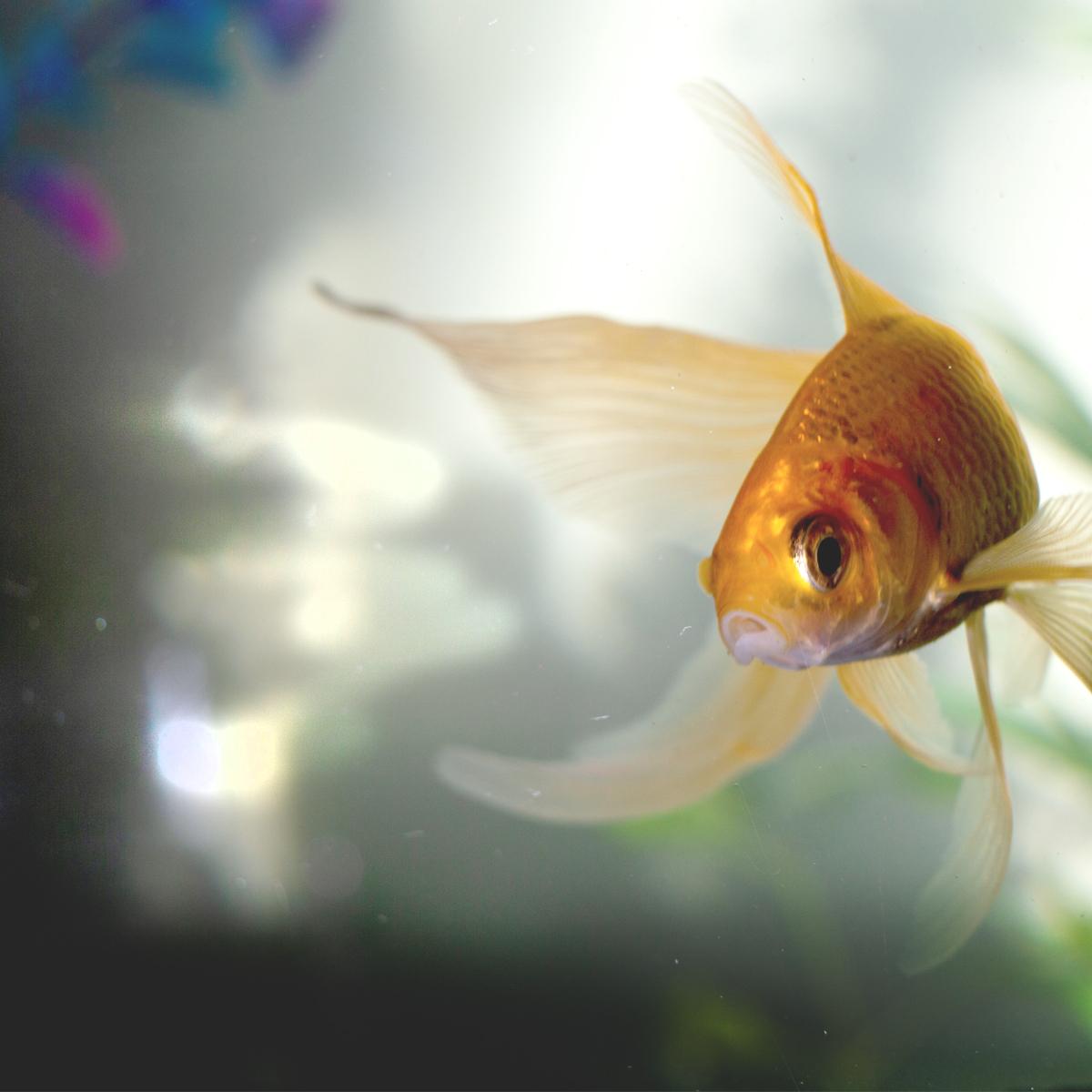 Ask-Expert-Aquarium-1200by1200--A